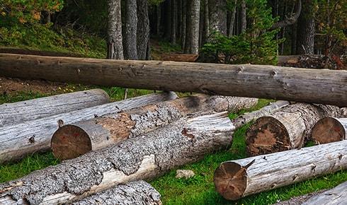 Gefällte Bäume liegen im Wald