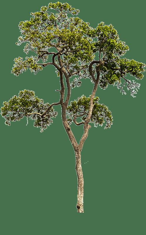 Illustration eines Baumes auf transparentem Hintergrund