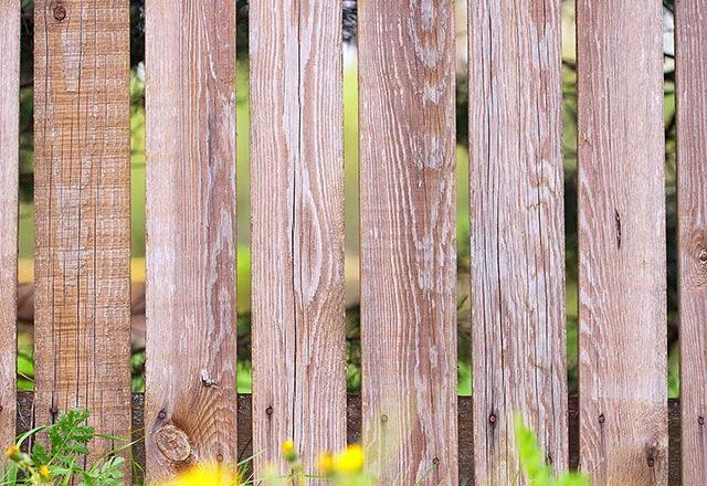 Holz Zaun mit gelben Blumen
